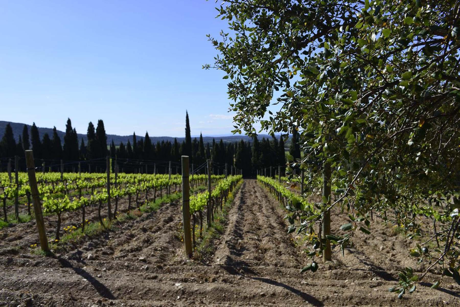 terres vinyes